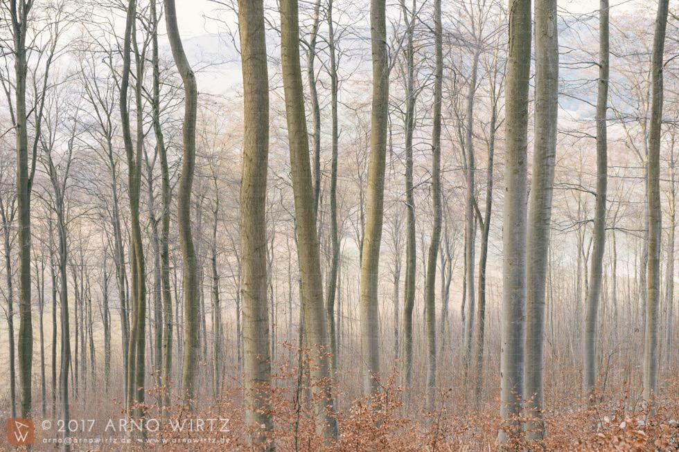 Wald bei der Bellerburg, Weserbergland, Deutschland | Photo: Copyright © 2017 Arno Wirtz
