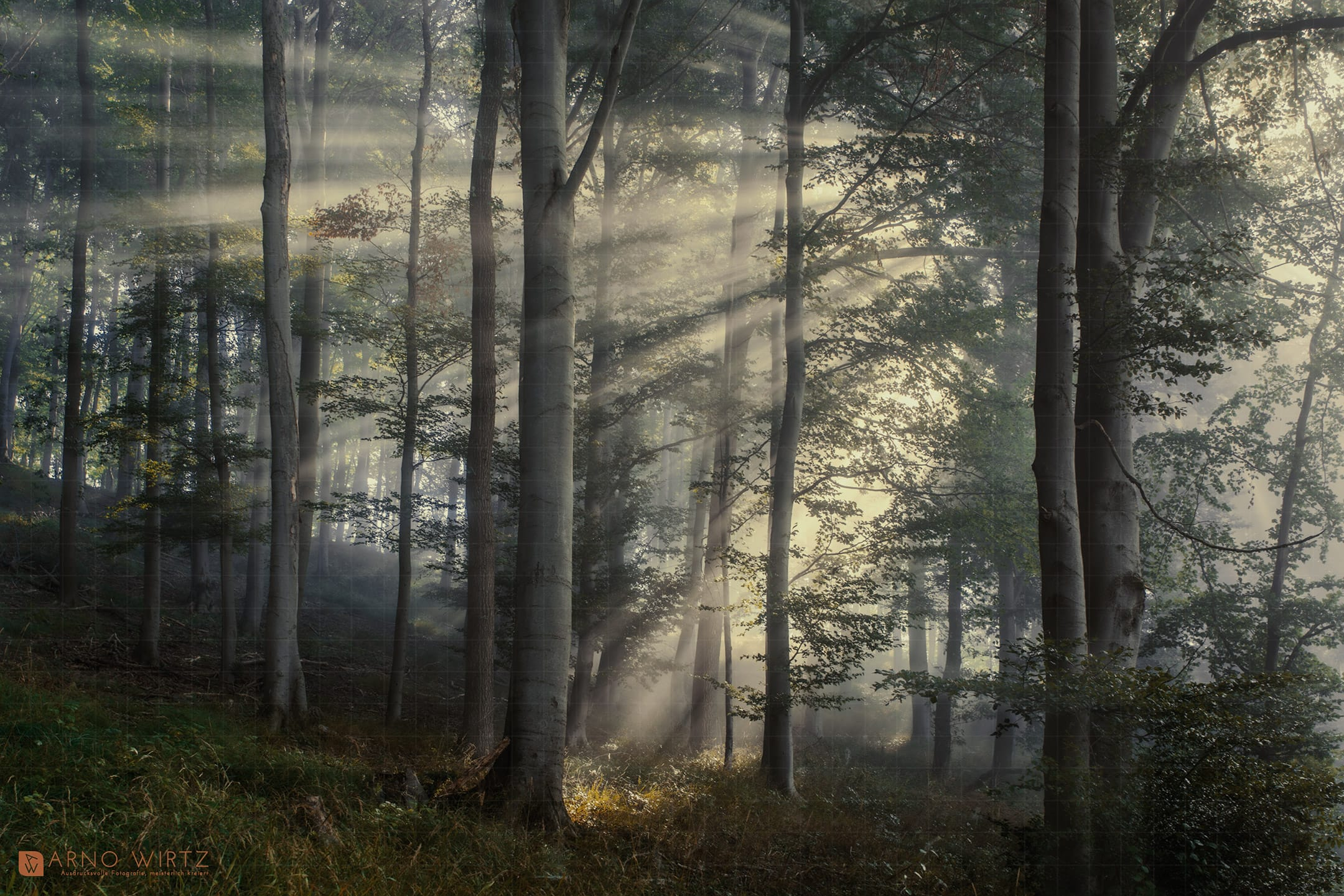 Copyright © 2021 Arno Wirtz - Wald in Erkeln | Nethetal, Sep. 2021